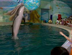 Read more about the article List of Major Aquariums and Dolphinariums in Dubai