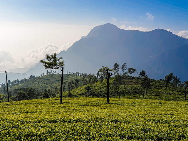 Read more about the article List of Hill Stations in Tamil Nadu
