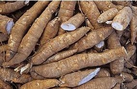 World's Largest Cassava Producing Countries