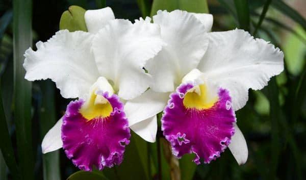 Orchid Garden and Botanic Garden