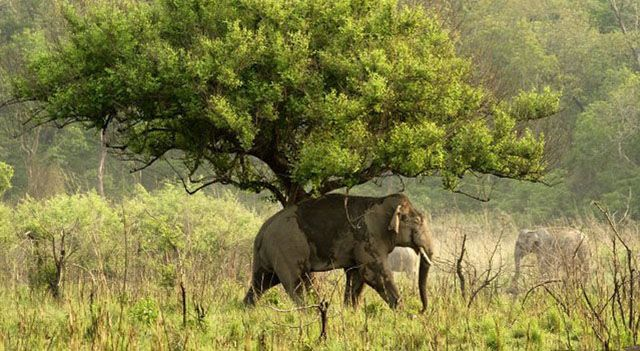 Read more about the article 10 Best Adventure Experiences at the Wildlife Sanctuaries in India