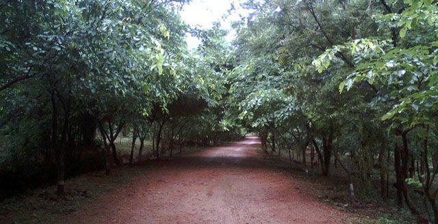 Kambalakonda Wild Life Sanctuary