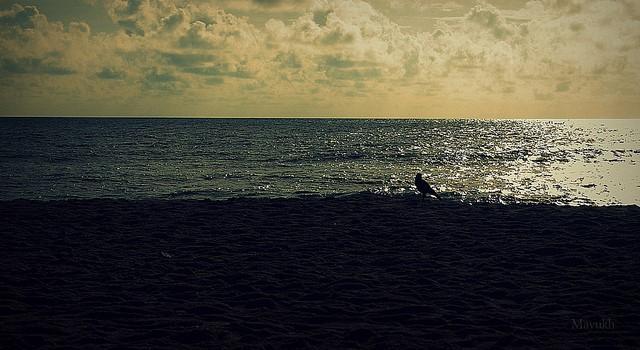 Edward Elliot's Beach