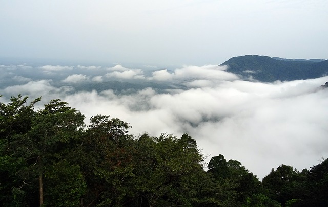 Rain Forest Agumbe