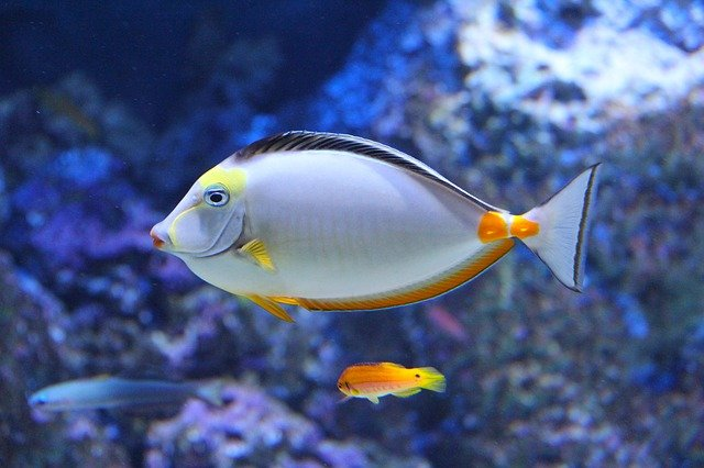 Read more about the article 4 Things You Should Know Before Ordering a Saltwater Fish Online