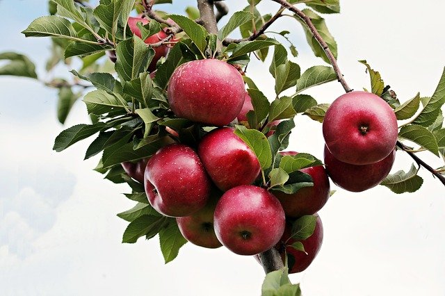 Read more about the article 20 World's Largest Apple Producing Countries