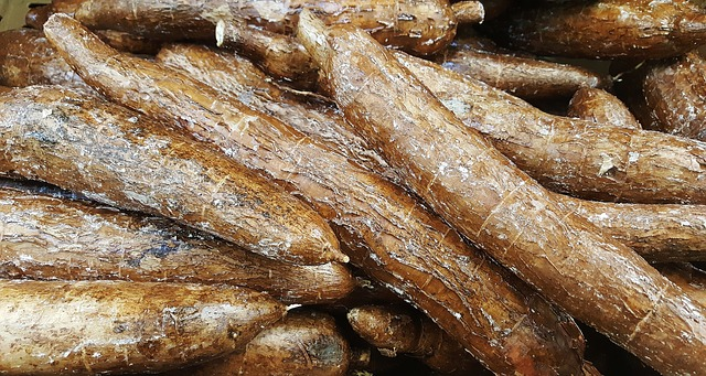 Read more about the article World's Largest Cassava Producing Countries